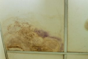 commercial water damage cleanup the woodlands, commercial water damage the woodlands
