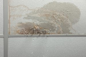 water damage cleanup madison, water damage repair madison